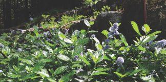 Jan Nelson The Mountain Gardener